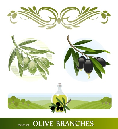 cooking oil: Vector set - olive branches