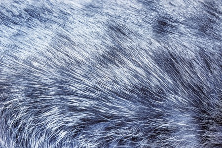 peltry: The texture of the hair of a cat of gray Stock Photo