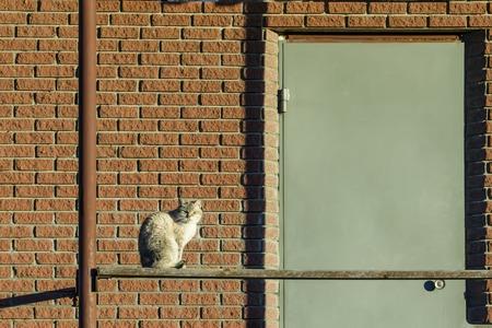 weed block: door, brick wall and the cat looking from the crack under the door