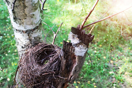 bird       s house: Birds nest on a birch tree in the sunlight. View from above. Stock Photo