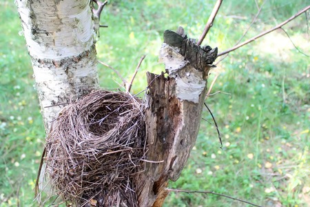 bird       s house: Birds nest on a birch tree. View from above.