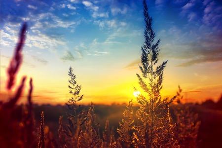 Grass at dawn in Russia