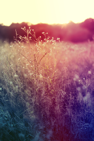 when: Grass when sunset with retro vintage filter