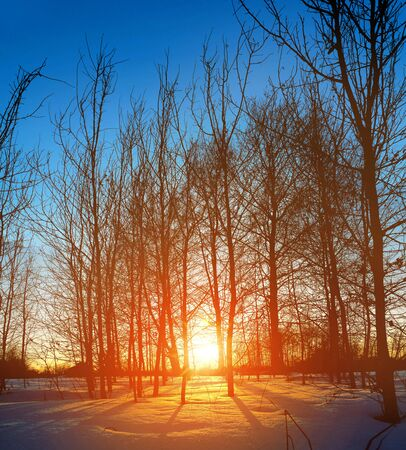 Sunset in the wood between the trees strains in winter period Stock Photo