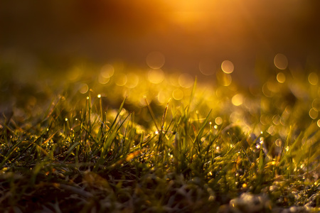 Grass with dew drops at sunrise a blurred background. Shallow depth of field. Banco de Imagens