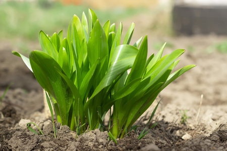 Fresh green grass in garden. Summer background. Imagens
