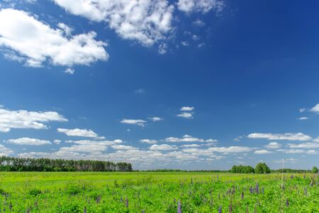 Beautiful summer landscape with green grass and blue sky with white clouds.