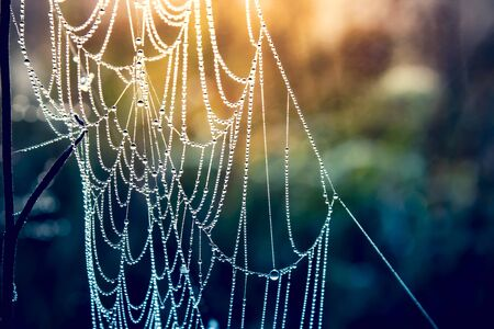 Morning dew on a web. Beautiful sunrise.