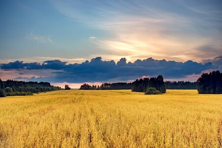 Beautiful summer landscape. Field and sky on sunset. Stock Photo