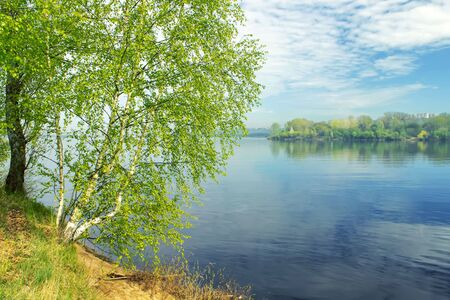 Beautiful landscape with a long thin birch trees with green leaves on the banks of the river Stock Photo