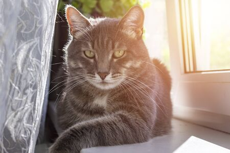 A pet beautiful cat laying in a window. Shallow depth of field with focus on eyes