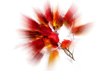 Beautiful colorful autumn leaves isolated on white background. Blur effect.