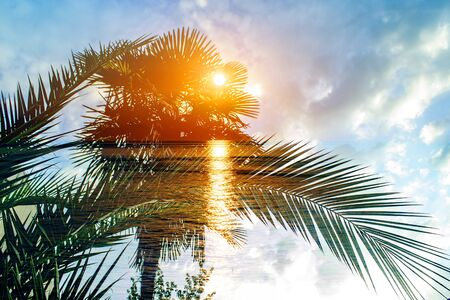 Tropical palm branches. Double exposure. Summer background
