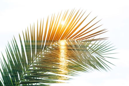 Ramas de palmeras tropicales. Exposición doble. Fondo de verano