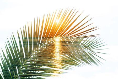 Rami di palma tropicale. Esposizione doppia. Sfondo estivo