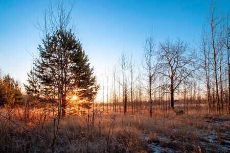 Frosty autumnal morning nature scene with trees 스톡 콘텐츠