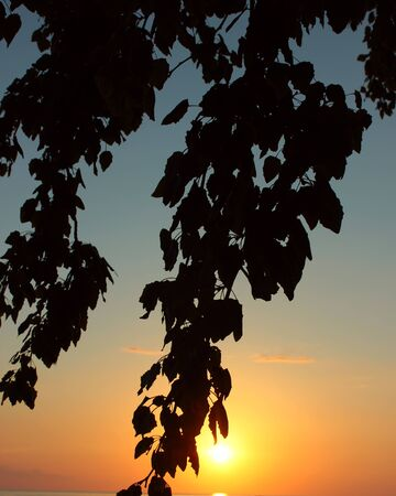 Silhouettes leaves on the branches of a tree against the setting sun Zdjęcie Seryjne