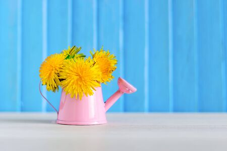 Yellow dandelion flowers in a small pink watering can. Spring concept