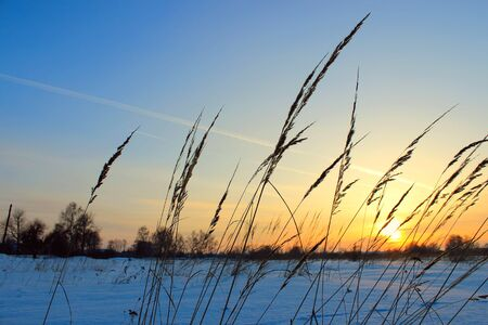 Grass on sunset in sunlight. Winter time Banco de Imagens