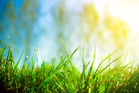 Fresh morning dew on spring green grass in sunlight Banco de Imagens