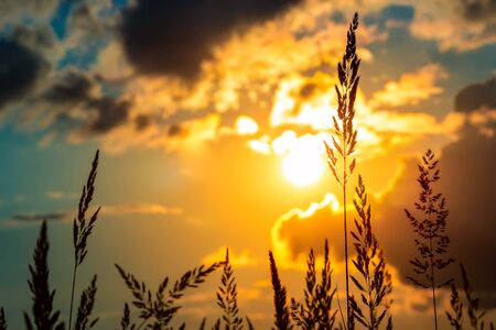 Grass on the sunset in the evening. Summer landscape
