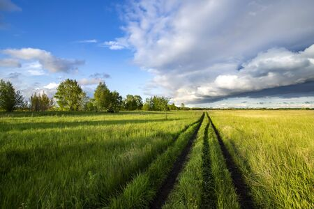 Road in the field among green grass and beautiful sky in the evening 免版税图像