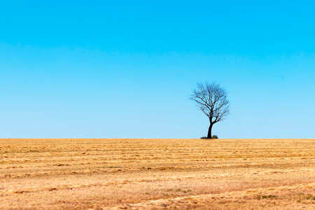 Dead single dry tree standing on a wild meadow with blue sky background