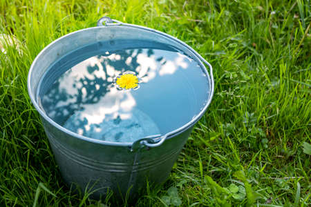 A metal bucket of water stands in the green grass on a sunny day Banque d'images