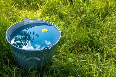 A metal bucket of water stands in the green grass on a sunny day