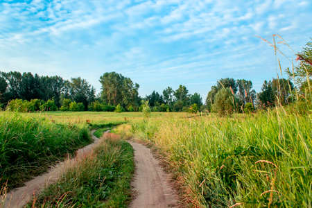 Country road in a field in summer. Morning in Russia