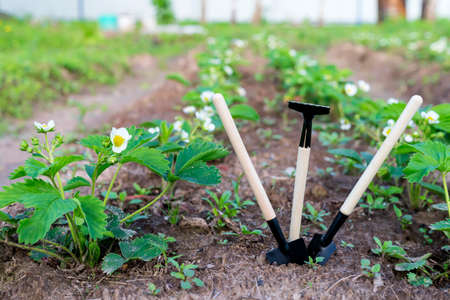 Mini shovels and rakes in the garden. The concept of planting plants in the garden in spring and summer