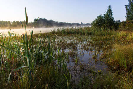 Sunrise over a swamp with fog and reeds. Sunny summer morning