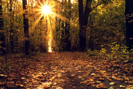 Autumn golden forest. Park recreation area. Autumn in Russia