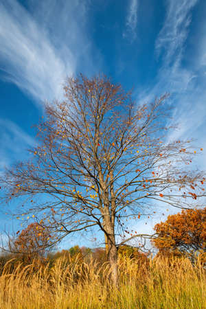 A tree without leaves against a blue sky with clouds on a sunny autumn day