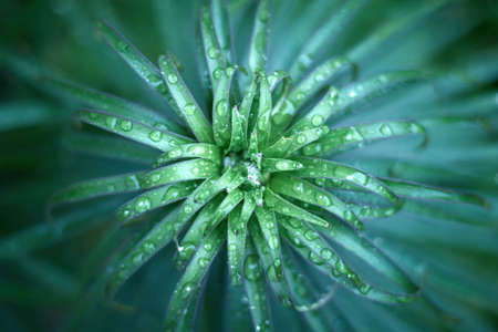 Close up of fresh green foliage with water drops after rain