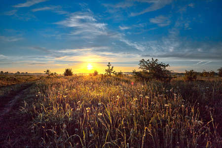 Summer landscape with flower meadow and majestic clouds in the sky on sunrise. Summer morning