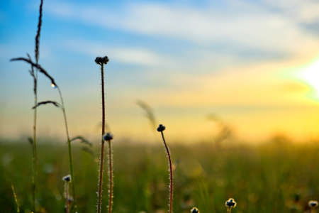 Summer landscape with flower meadow and grass in the sky on sunrise. Summer morning