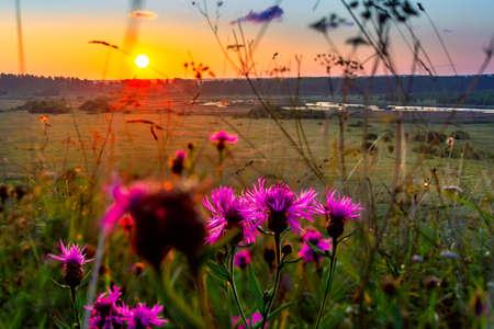 Summer sunrise in the field. Rustic landscape.