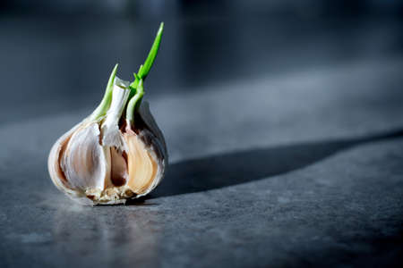 Organic food. Garlic lies on a gray table and illuminated by the sun