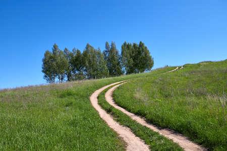 Birches grow on a hill. Road among green grass. Sunny summer day Stok Fotoğraf