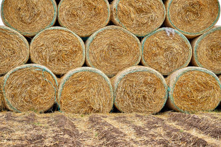 Baked hay and straw at the end of summer. Close up