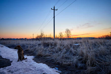 The dog sits on the snow and meets the spring sunrise