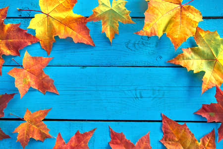 Autumn background with colorful fall maple leaves on blue rustic wooden table with place for text. Thanksgiving autumn holidays background concept. Frame with autumn leaves. Copy space. Top view Stok Fotoğraf