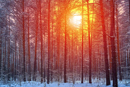 Mystic winter forest in russia. Concept of winter holidays and New Year holidays