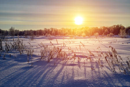 Dry grass against cold winter sunrise