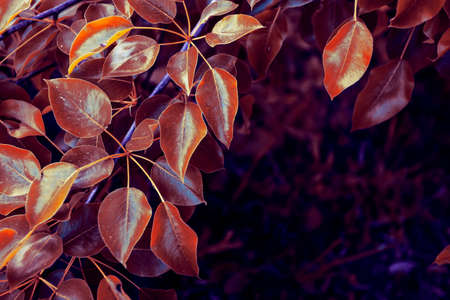Red autumn leaves on a wall. Autumn background