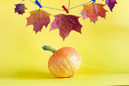 Pumpkin and autumn leaves on yellow background
