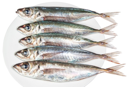 Five raw mackerel on a plate. On a white background. Stock Photo - 13010214