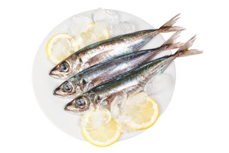 Three raw mackerel in ice and lemon. On a white background. photo