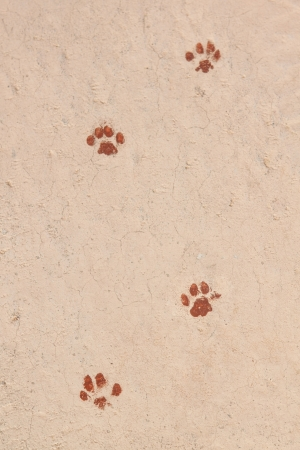 Traces of animals painted on the track  photo